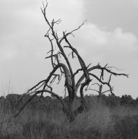 Twisted Tree by surferpete