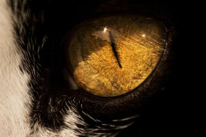 cats eye by Raemed