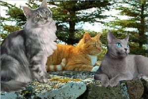 Graypaw, Firepaw and Bluestar by Sooty123