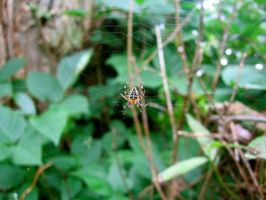 Spider a Grondine by Snyki