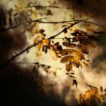 Rustling leaves by wiwionart