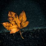 Not the only one by fotojenny