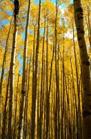 Deep in the Aspens by freeskifreeride