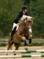 Showjumping 18 by wakedeadman