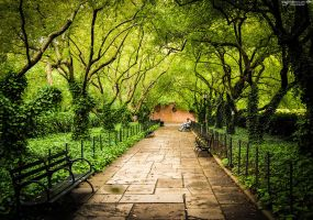 Central park #1 by The-proffesional
