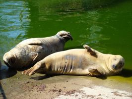 Stock 382: seals by AlzirrSwanheartStock