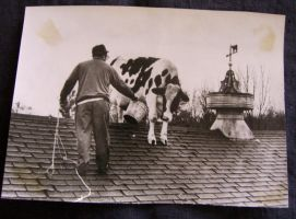 The Cow on the Roof by impalabee