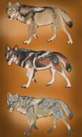 Tribal coyotes auction - CLOSED by ForeignFrontierRanch