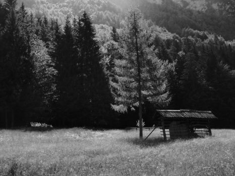 Rural composition by Classist