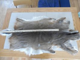 Craft Whitetail Doe Pelt (SOLD) by Saceronsage
