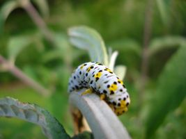 caterpillar by hoernchen610