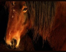 Russet Fur by howlinghorse