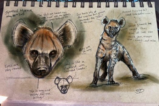 Hyena 1 Watercolor Test by Waterbear