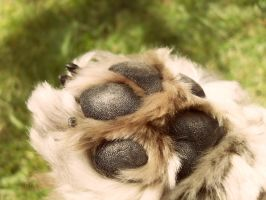 Dog Paw by AdoniMiah