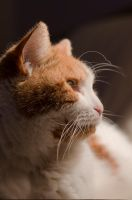 Whiskers by JBphotographer