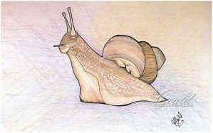 Snail Day by ThisWomanWanders