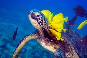 Lei Of Tangs by peterliuphoto
