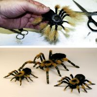 Furring Spiders by TimBakerFX