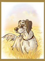 English Setter by colonel-strawberry