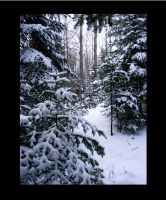 unspoiled Snow by jesse-botanical