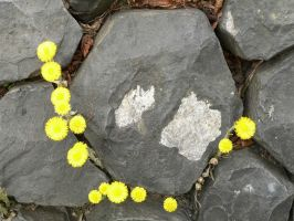 PXN Flowers on stone by phanxine