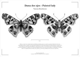 2 views of the same butterfly by Mely-Val