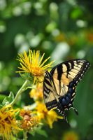 Yellow Butterfly by MadeBroken626