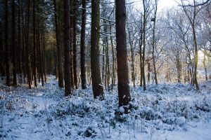 Snowy Woodland 13 by joannastar-stock
