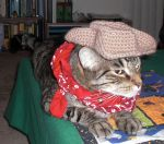 Crochet Kitty Cowboy Hat by RainKitty18