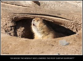 Prairie Dog Mondays by SilkenWinds