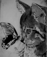 Cat and Butterfly by Andriks