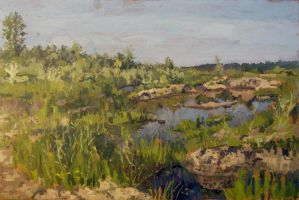 marshes in Kazimierz in Poland by ladmen
