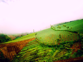 green field by fatal-complexes