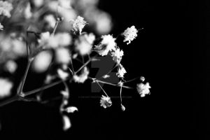 delicate I by cw-art-photography