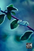 First Frost by eyefish