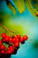 Red Berries. by PhysicalMagic