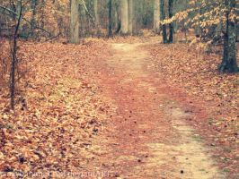 Path Of Leaves by hourglass-paperboats