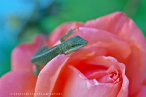 Lizard On Rose II by KissofCrimson