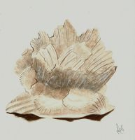 Fossil Shell and Barnacles by Pequena-Artista