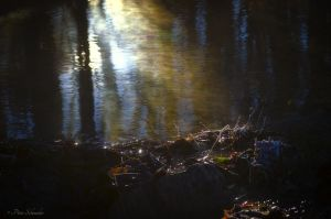 First sunbeams . by Phototubby