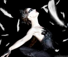Black Swan by CARLOSD