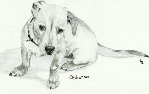 Osborne drawing .:Commission:. by RedSoulWolf13