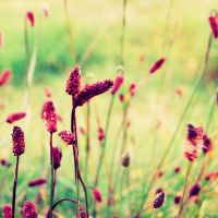 .: devoted :. by biszkopciik