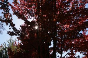 fall and sun star by acollins973