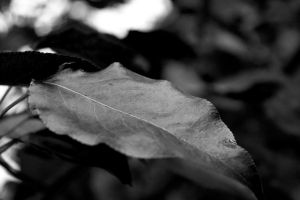Veins by KatieLindPhotography