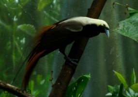 Bird of Paradise II by DaytonaBlue64Impala