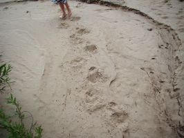 Footprints on sand 1 by Panopticon-Stock