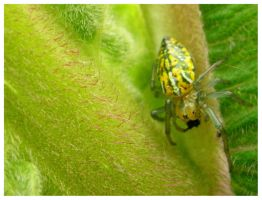 yellow and green spider by tomegatherion