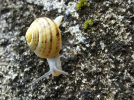 A Snail by Andromede213