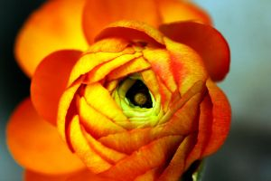 Orange. by MaryannKeppler